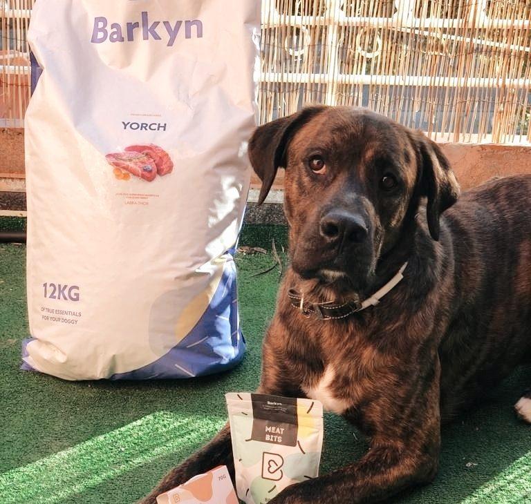Barkyn alimento personalizado para nuestros perros